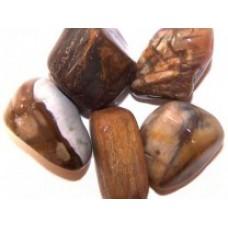 Απολιθωμένο Ξύλο – Petrified Wood